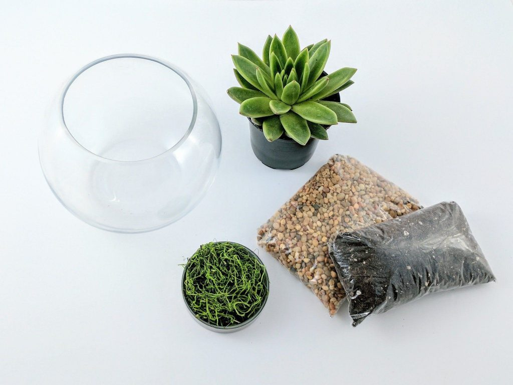 Terrarium DIY Materials