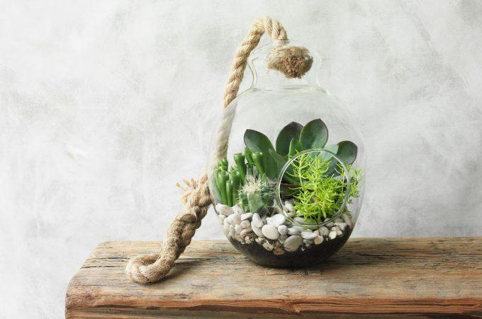 DIY Terrarium Ideas and Tips