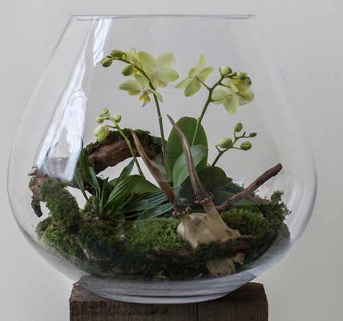 DIY Terrarium Decoration Items